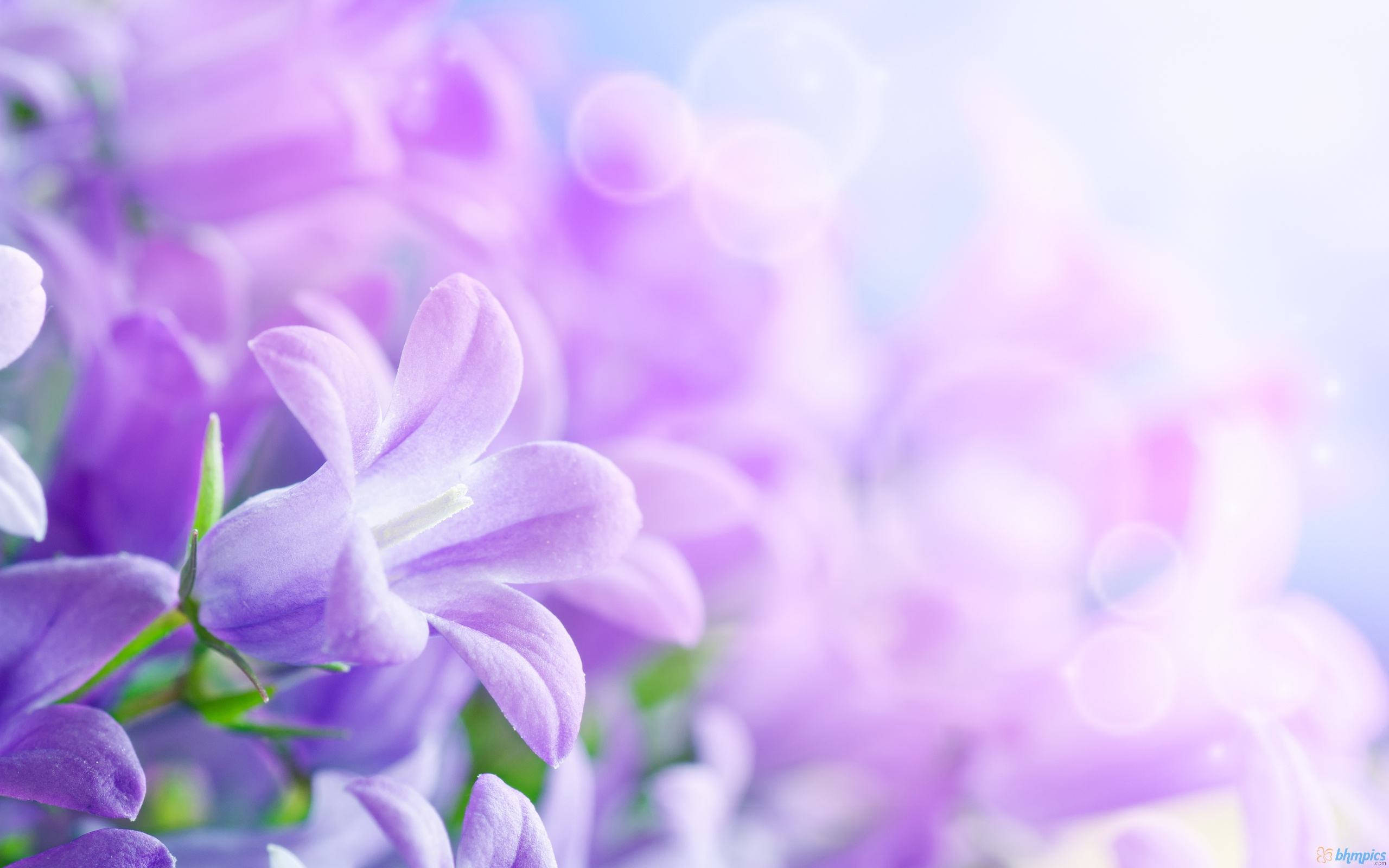 HD Purple Flower Background For Free