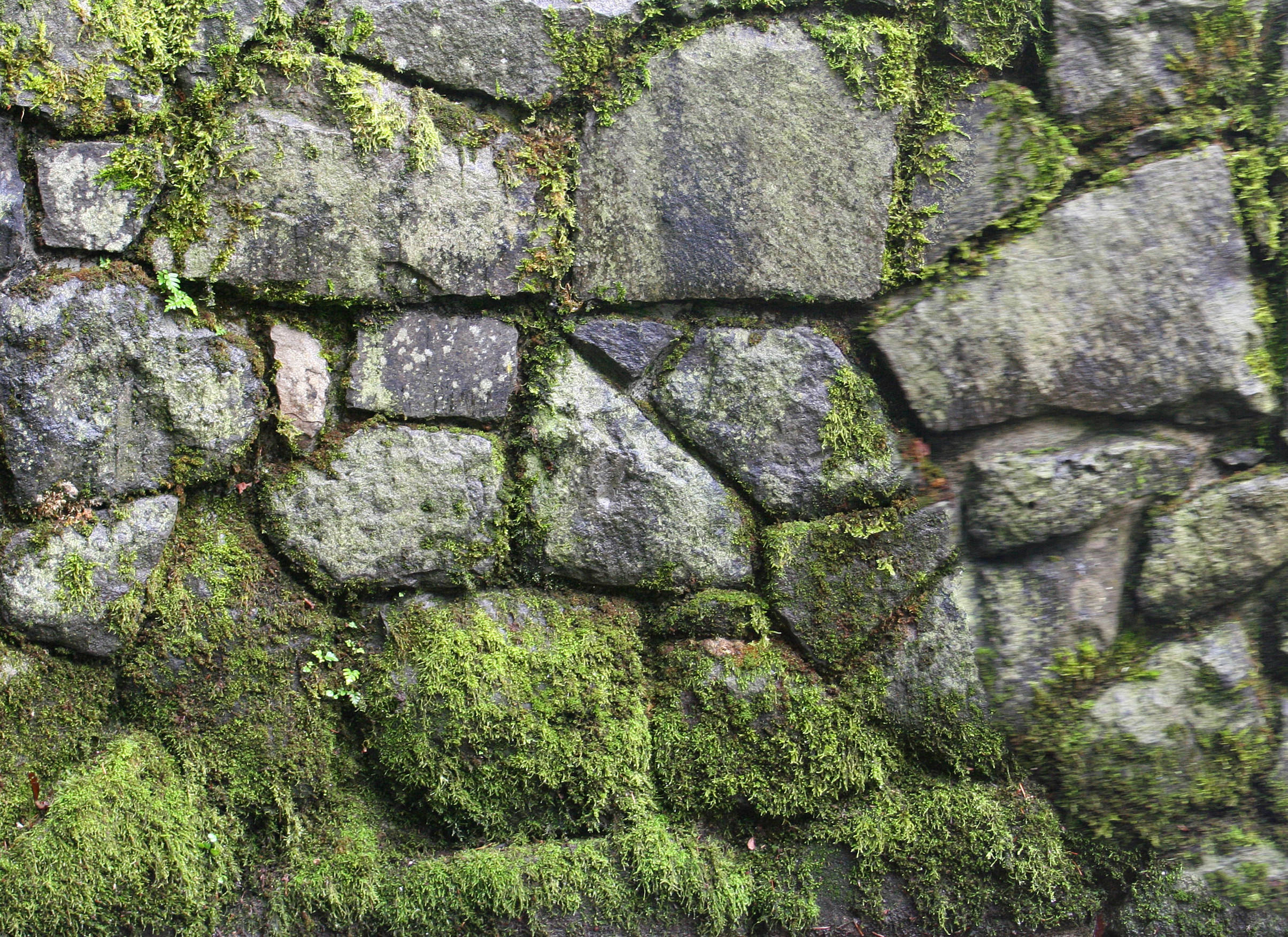 High Def Stone Wall Moss Growth Texture