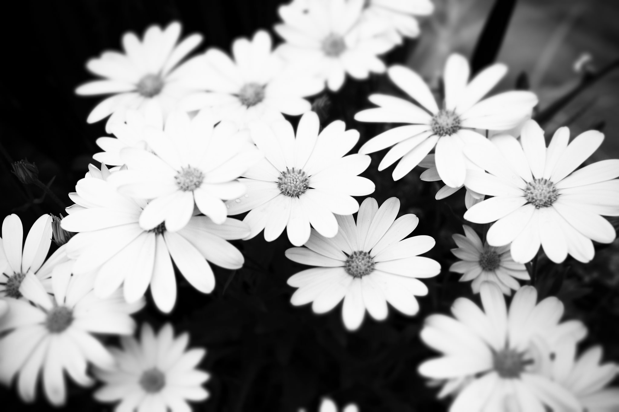 High Res Black andWhite Floral wallpaper