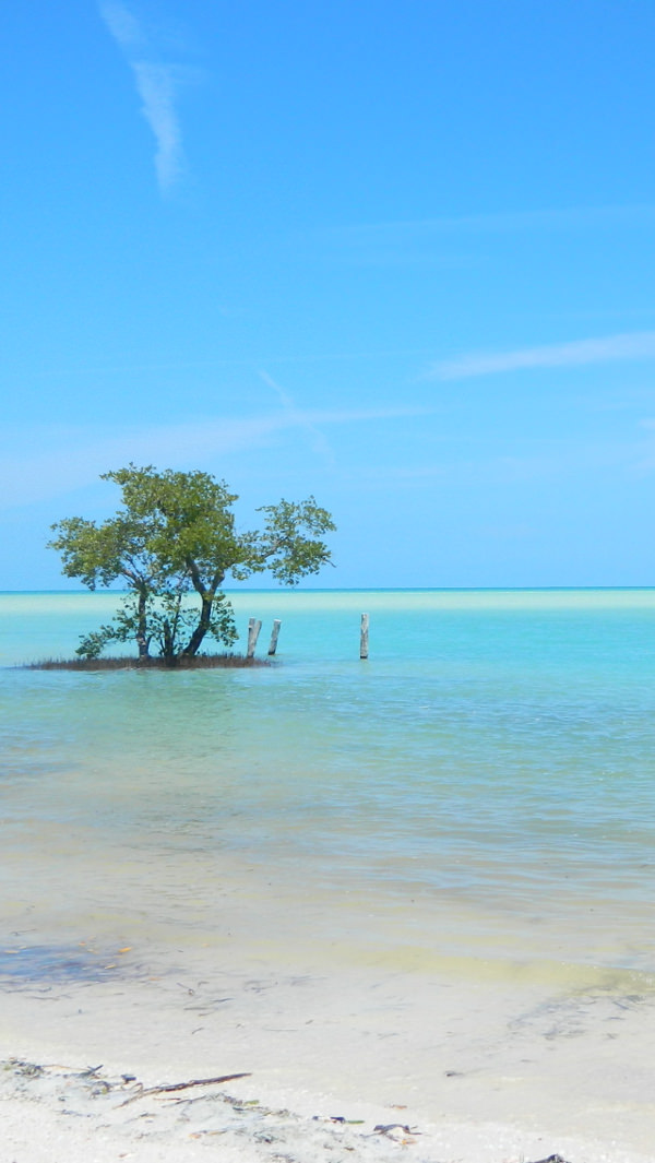 Holbox Mexico iPhone 5c Background For Free