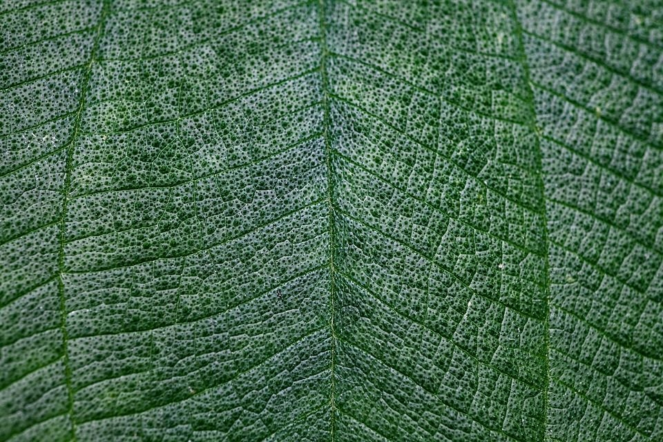 Macro Green Leaf Texture For Free