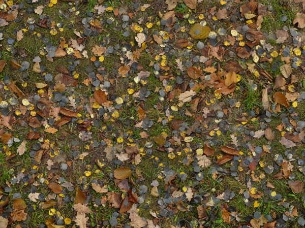 Mixed Leaves Texture For Free