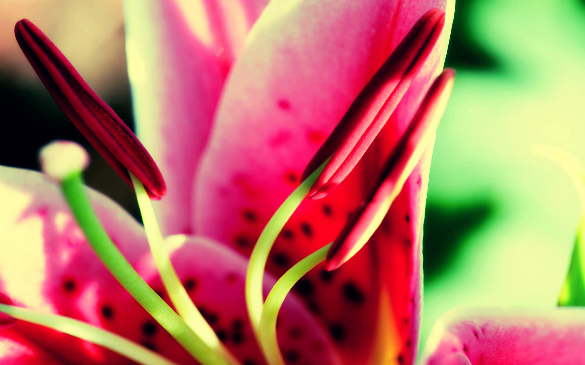 20+ Tumblr Flower Backgrounds