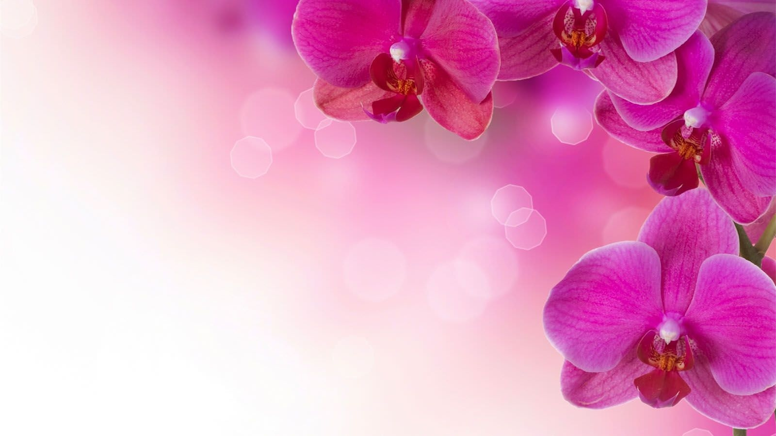 Pink Flowers with Bokeh Background