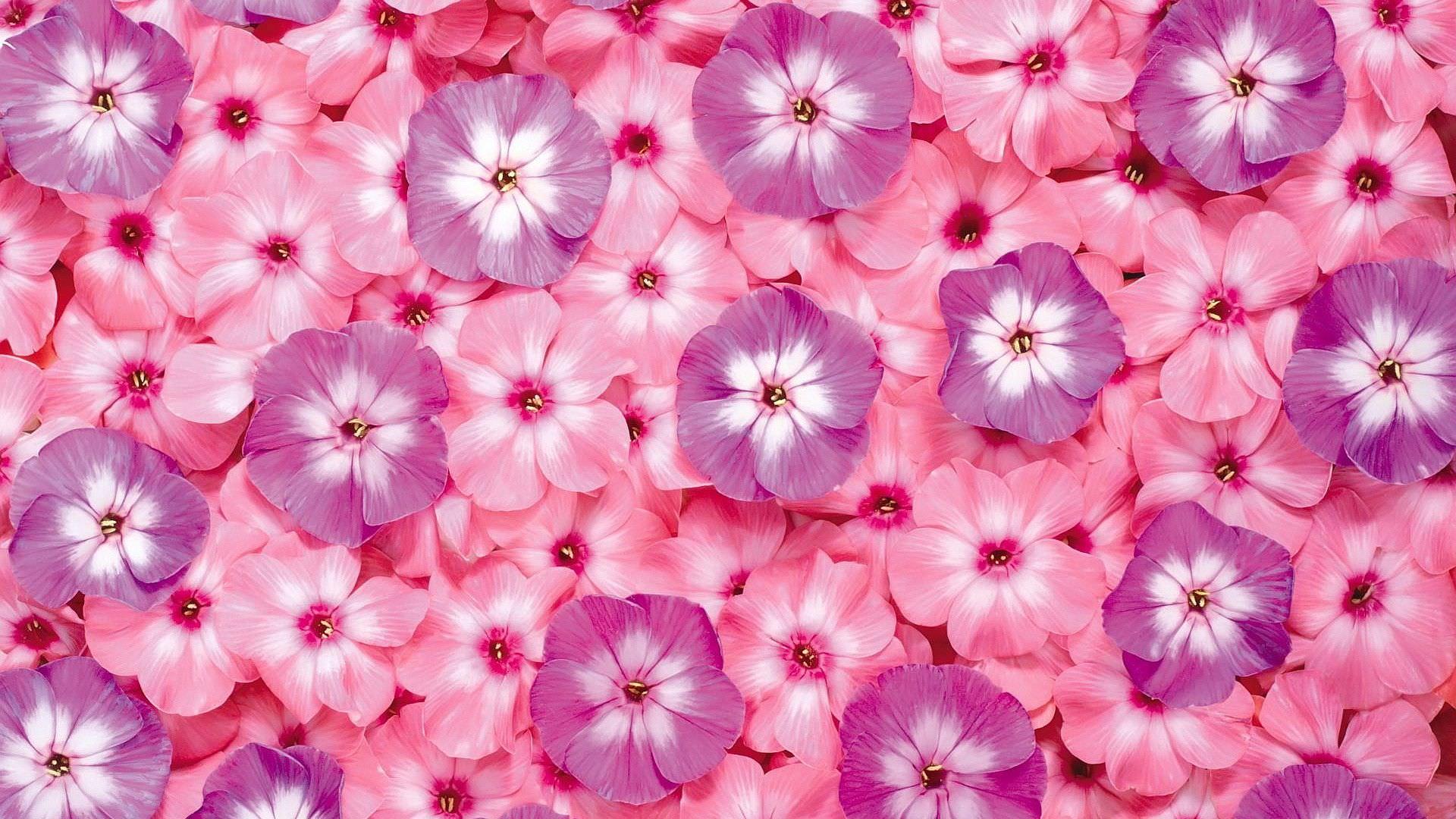 Pink HD Flower Wallpaper
