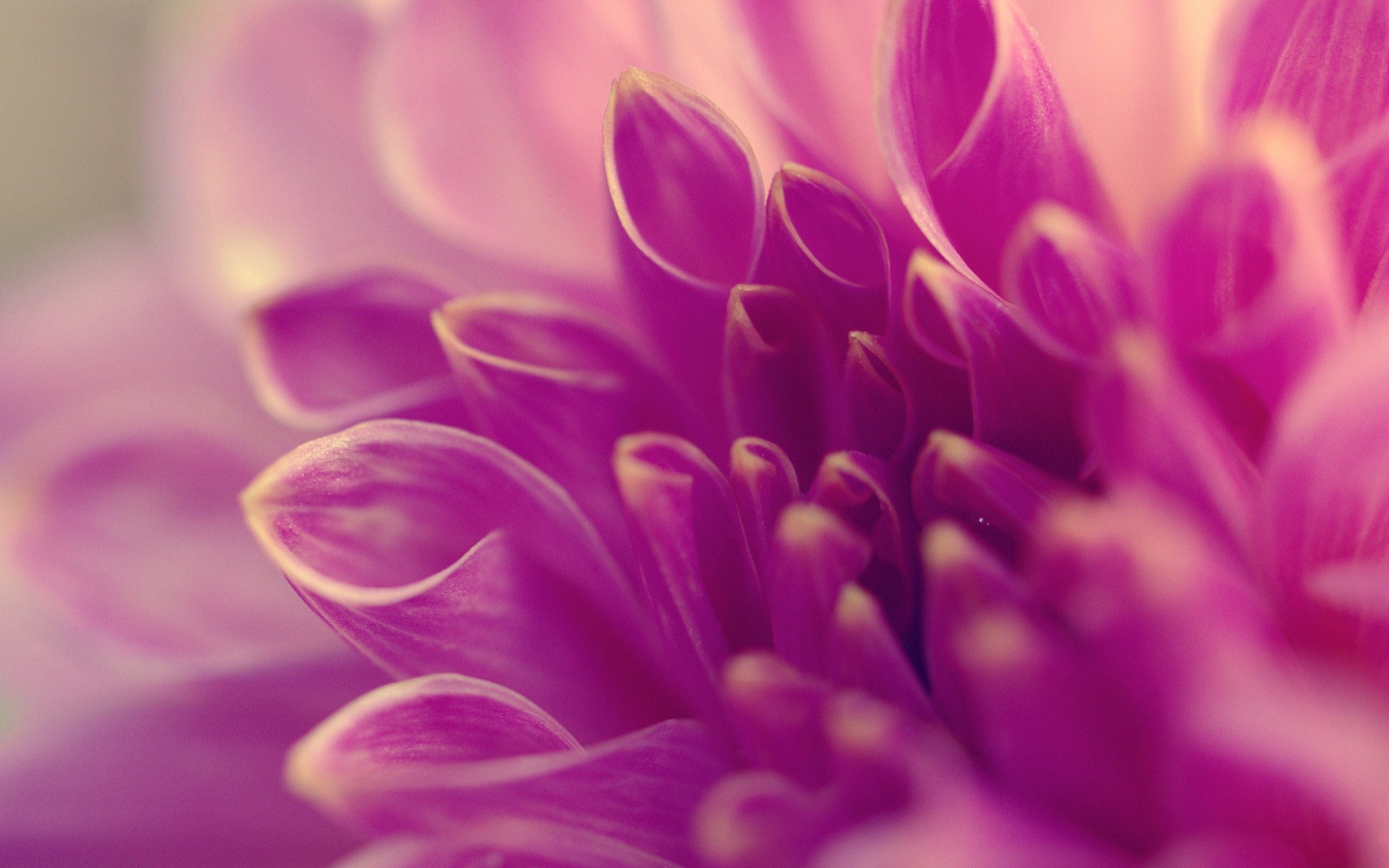 20+ Purple Flower Backgrounds | Wallpapers | FreeCreatives