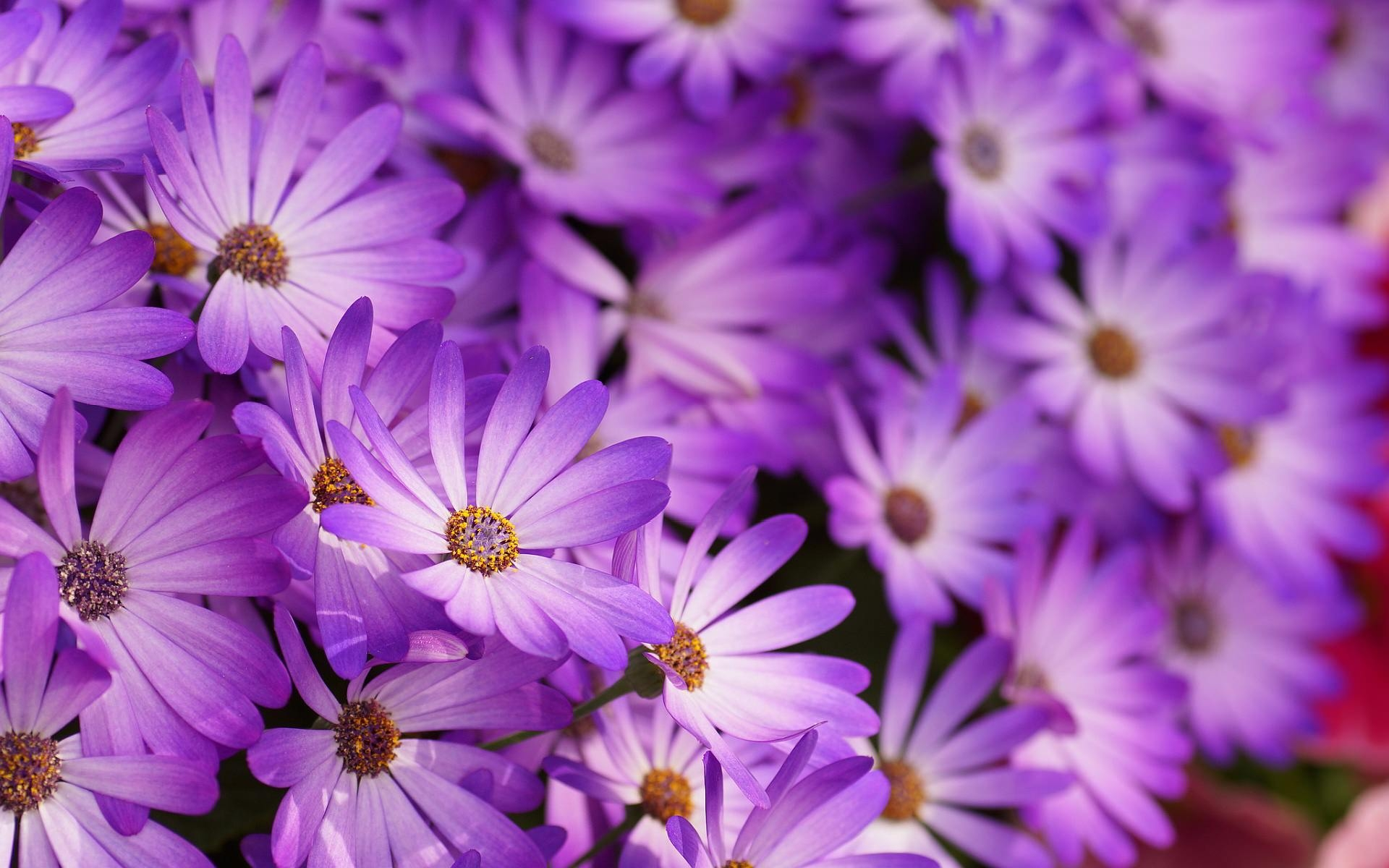 Purple HD Floral Wallpaper for Desktop