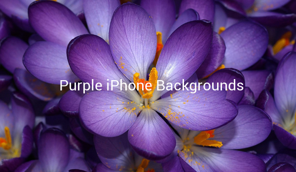 Purple iPhone Backgrounds