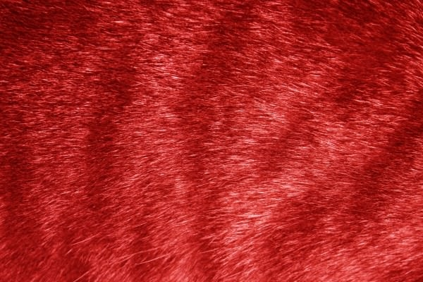 Red Tabby Fur Texture