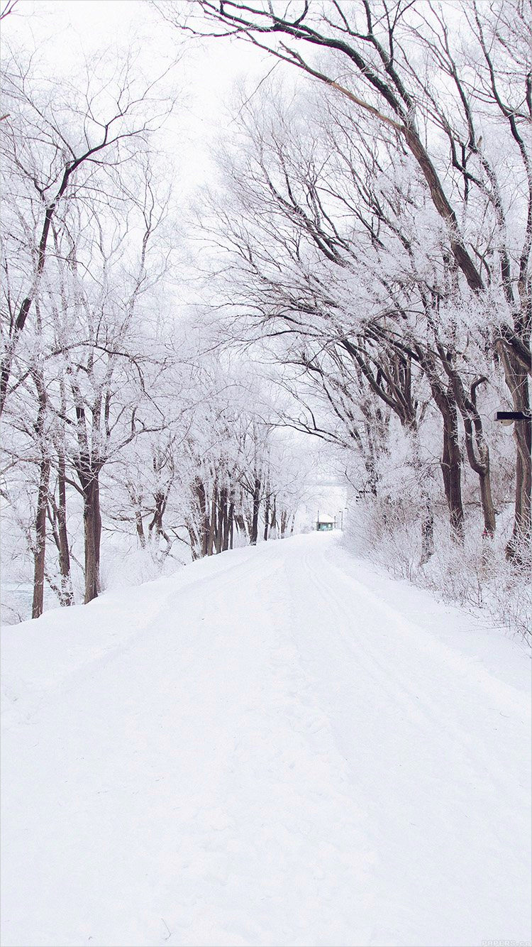 Romantic White Winter Road For iPhone Background