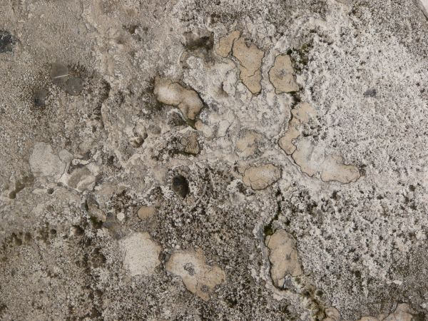 Rough Concrete Texture For Free