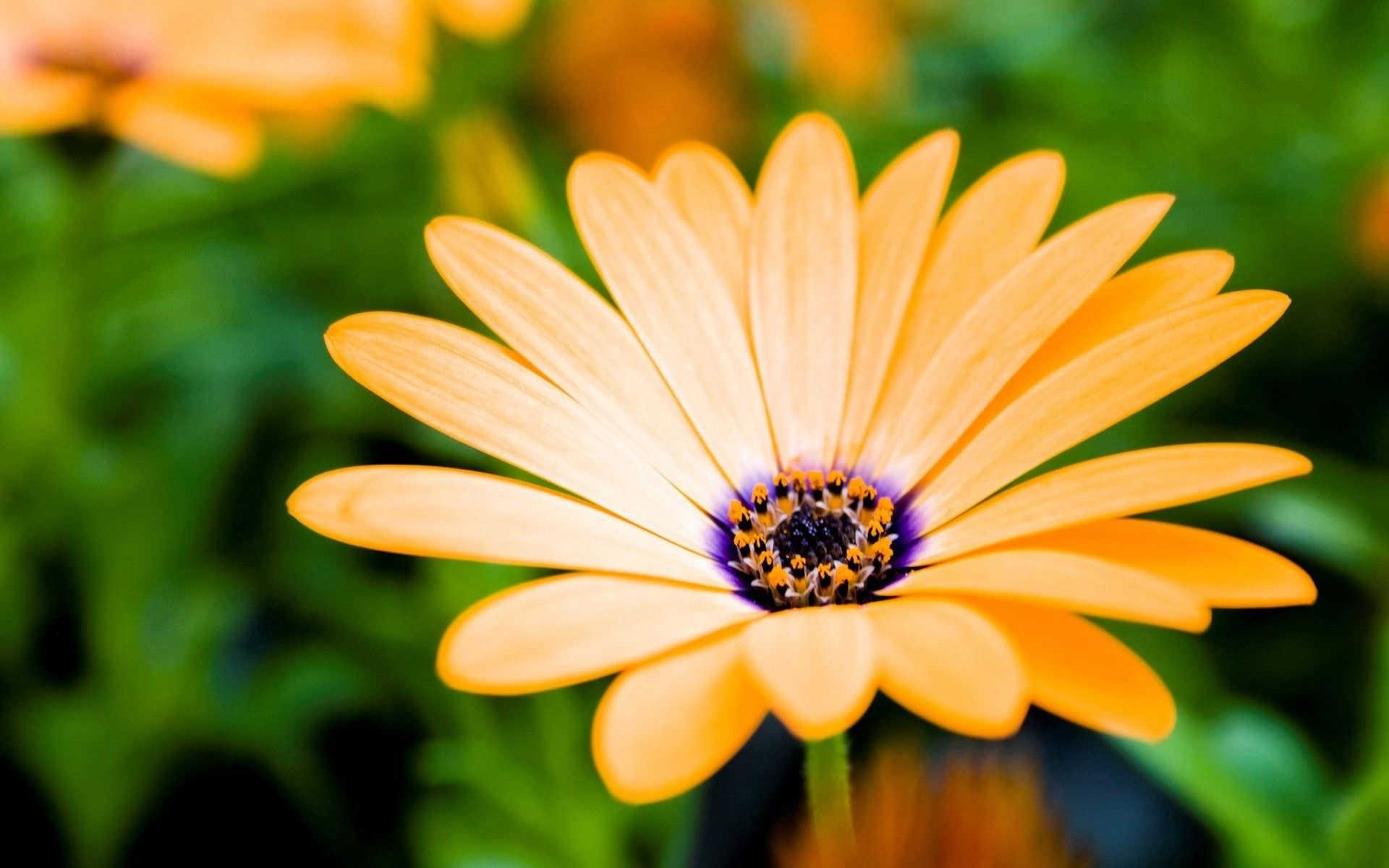 Stunning Yellow Flower Background