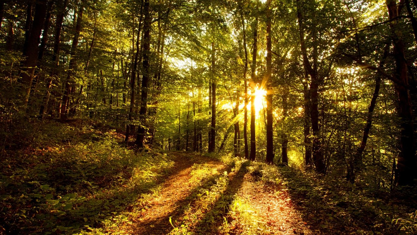 Sun Light Forest Background For Free