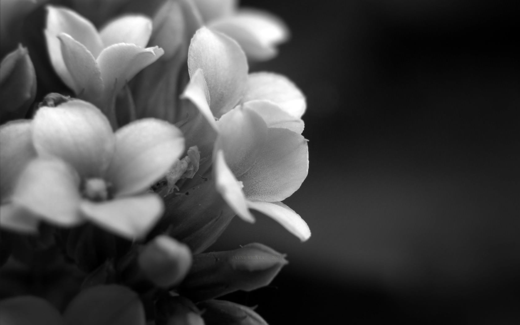 Wide HD Black and White Floral Wallpaper