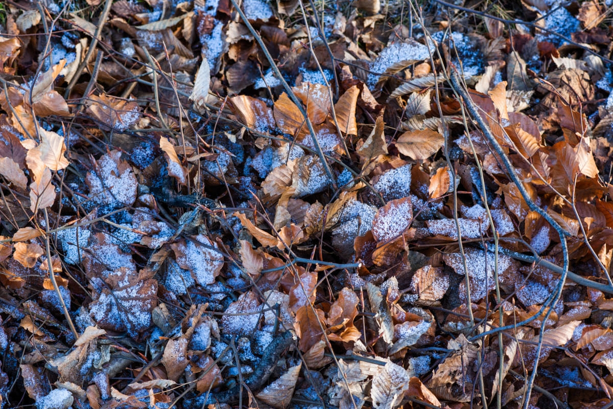 Winter Leafs Texture For Free