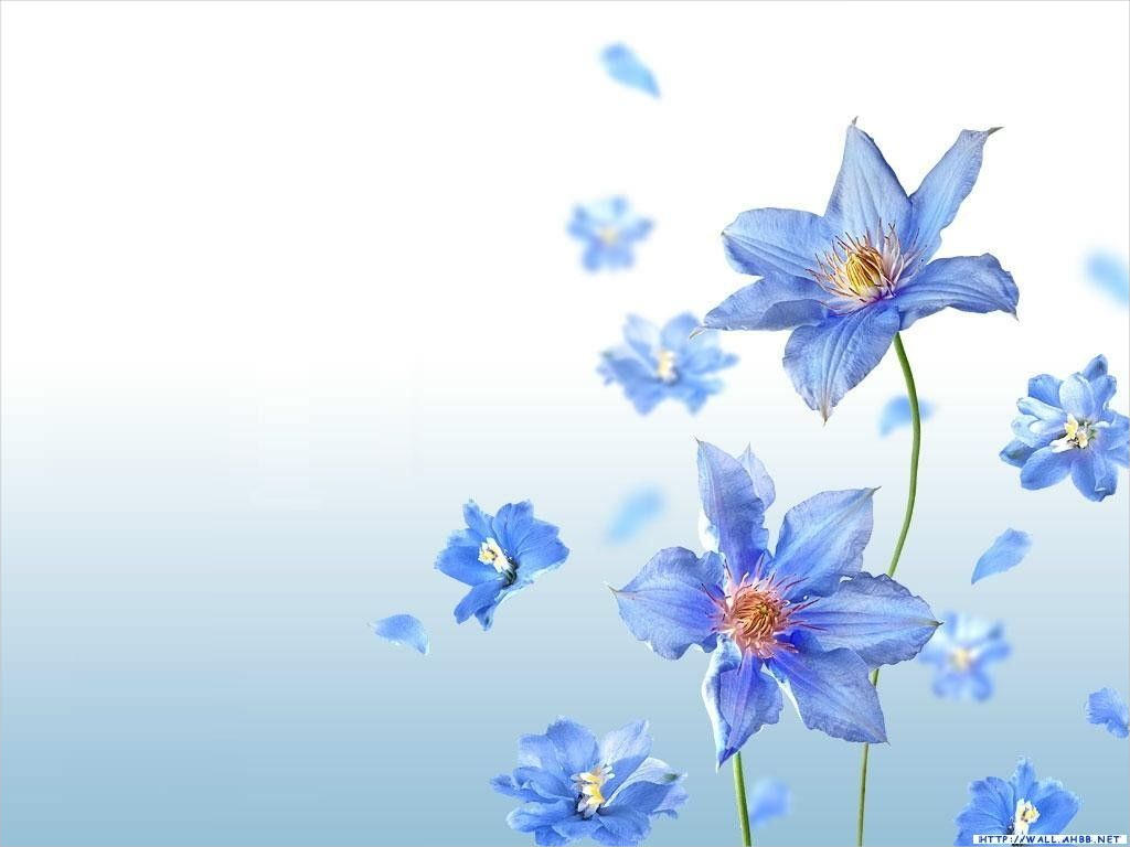 Wonderful Blue Flowers Background