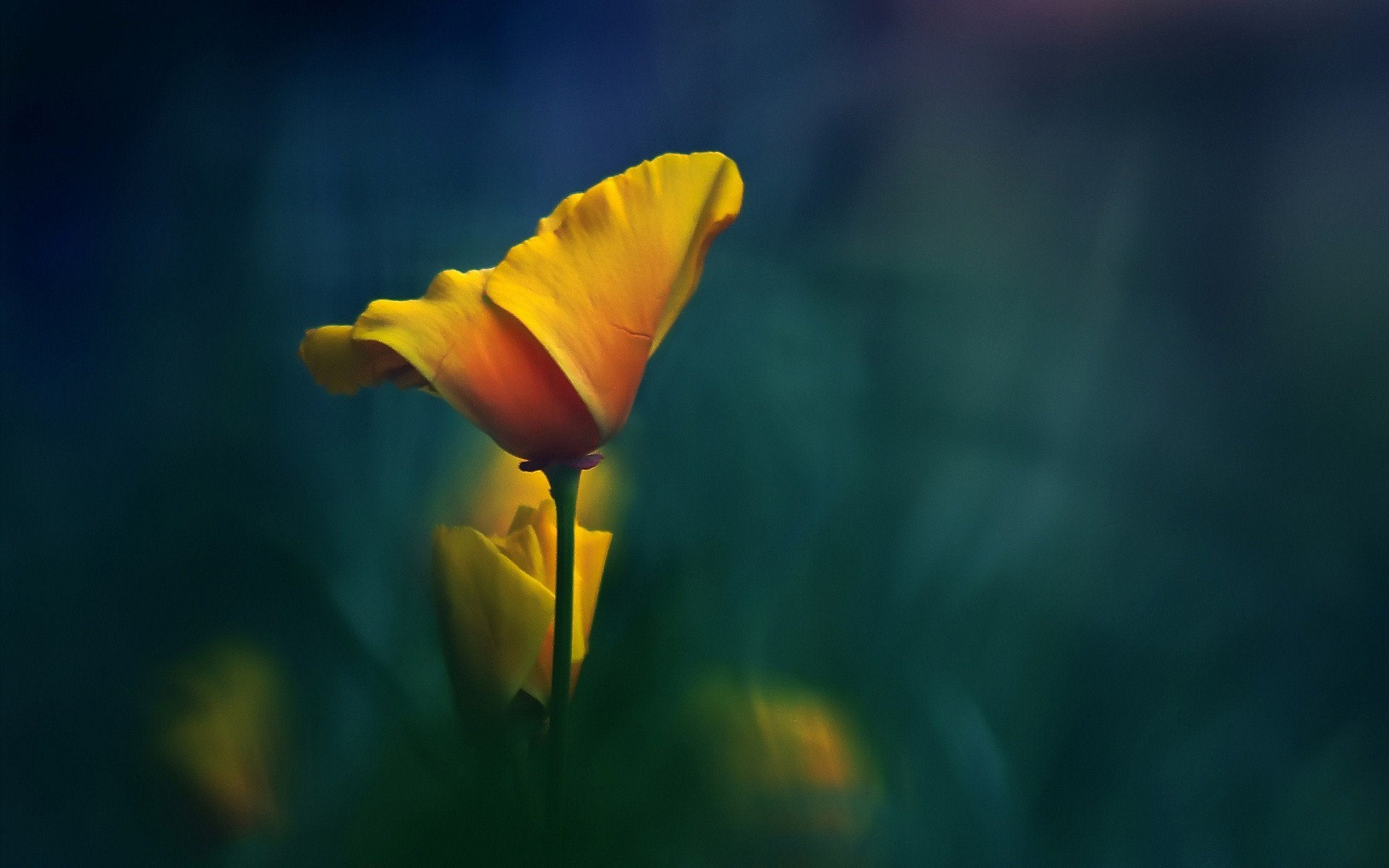 Yellow Flower Background For Download