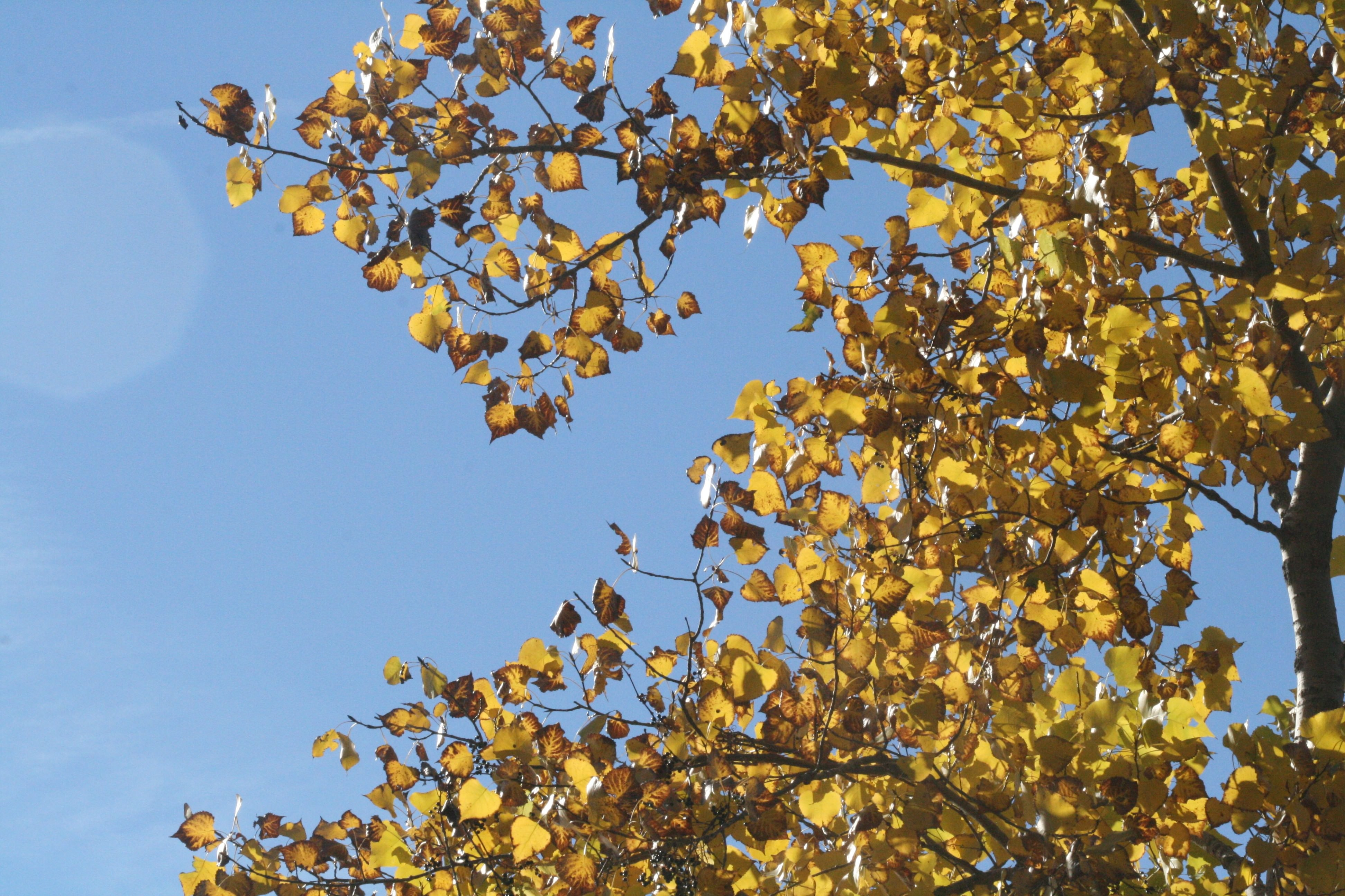 Yellow Leaves Texture For Free