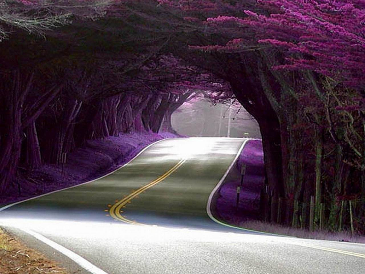 purple Road Background For Free