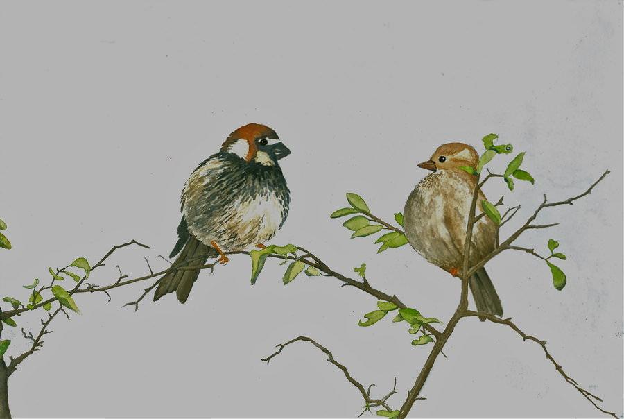 Watercolor Bird Drawing