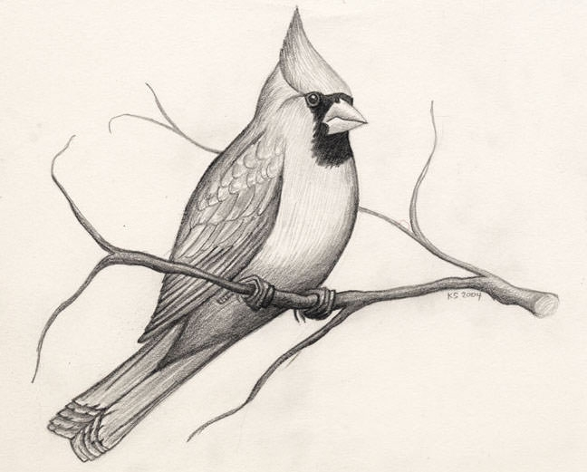 15+ Bird Drawings - JPG Download