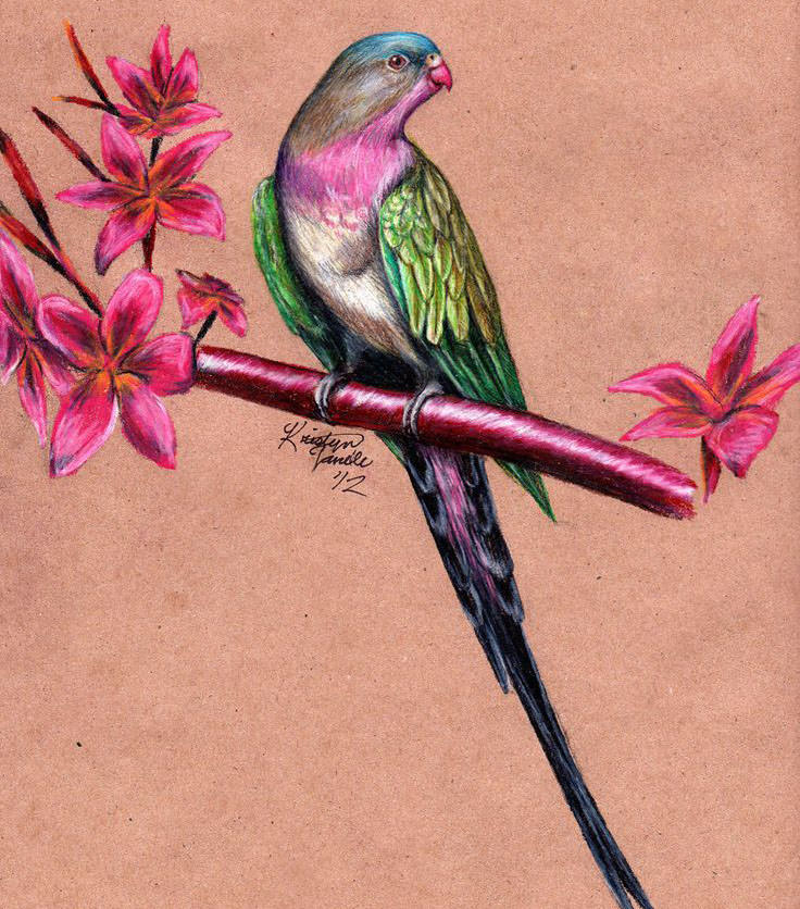 Colorful Bird Drawing