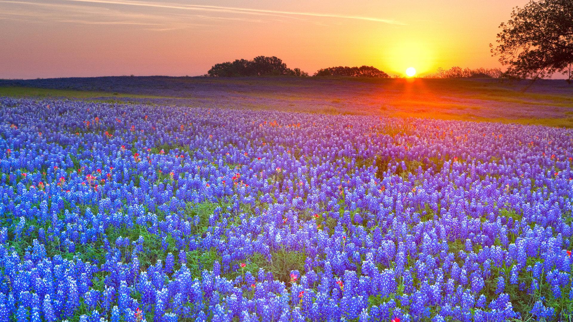 Texas Landscape Wallpaper