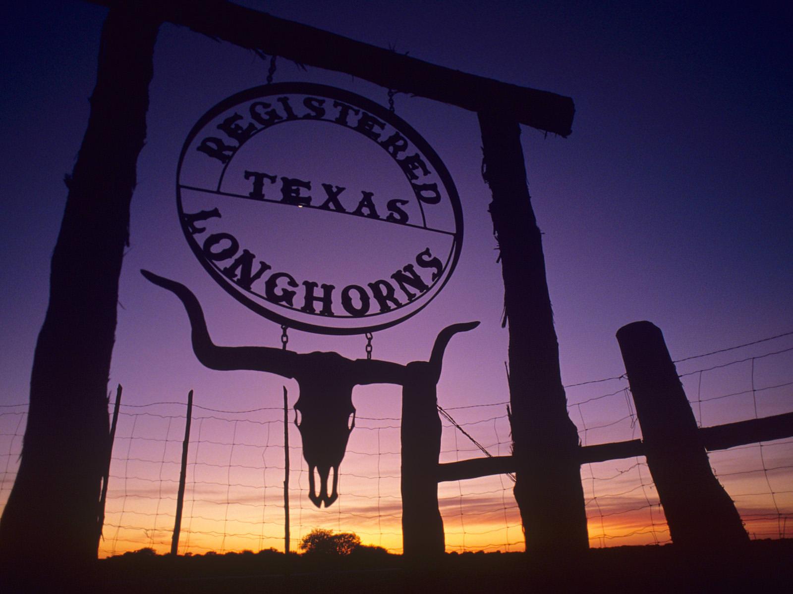 Texas Long Horns Wallpaper