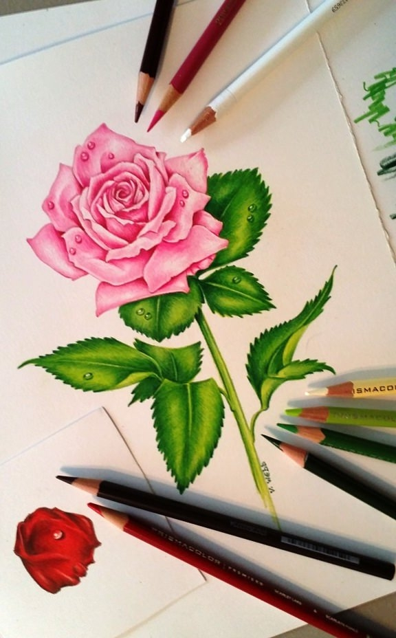 Pretty Pink Rose Flower Drawing