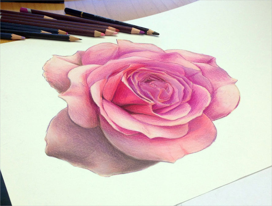 Best Color Pencil Rose Drawing