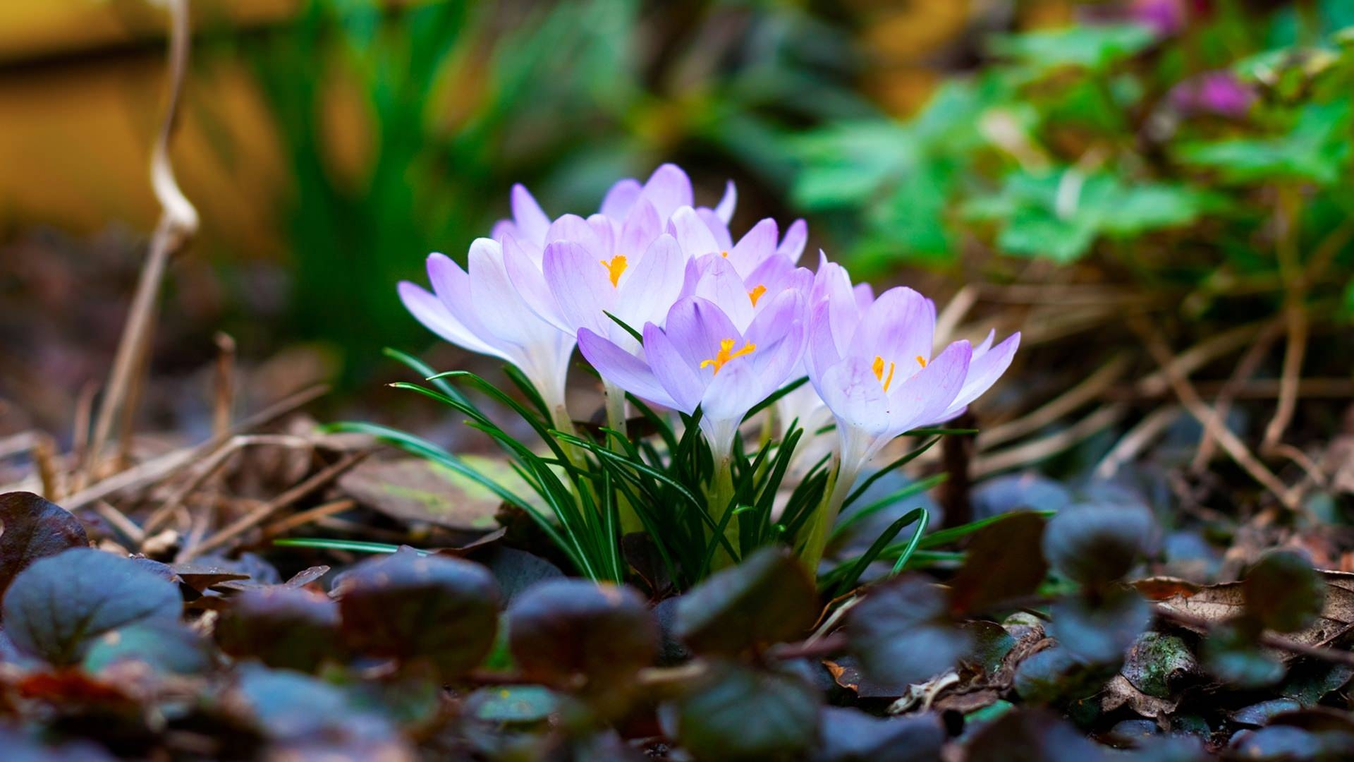 hd nature wallpaper for desktop with spring flowers