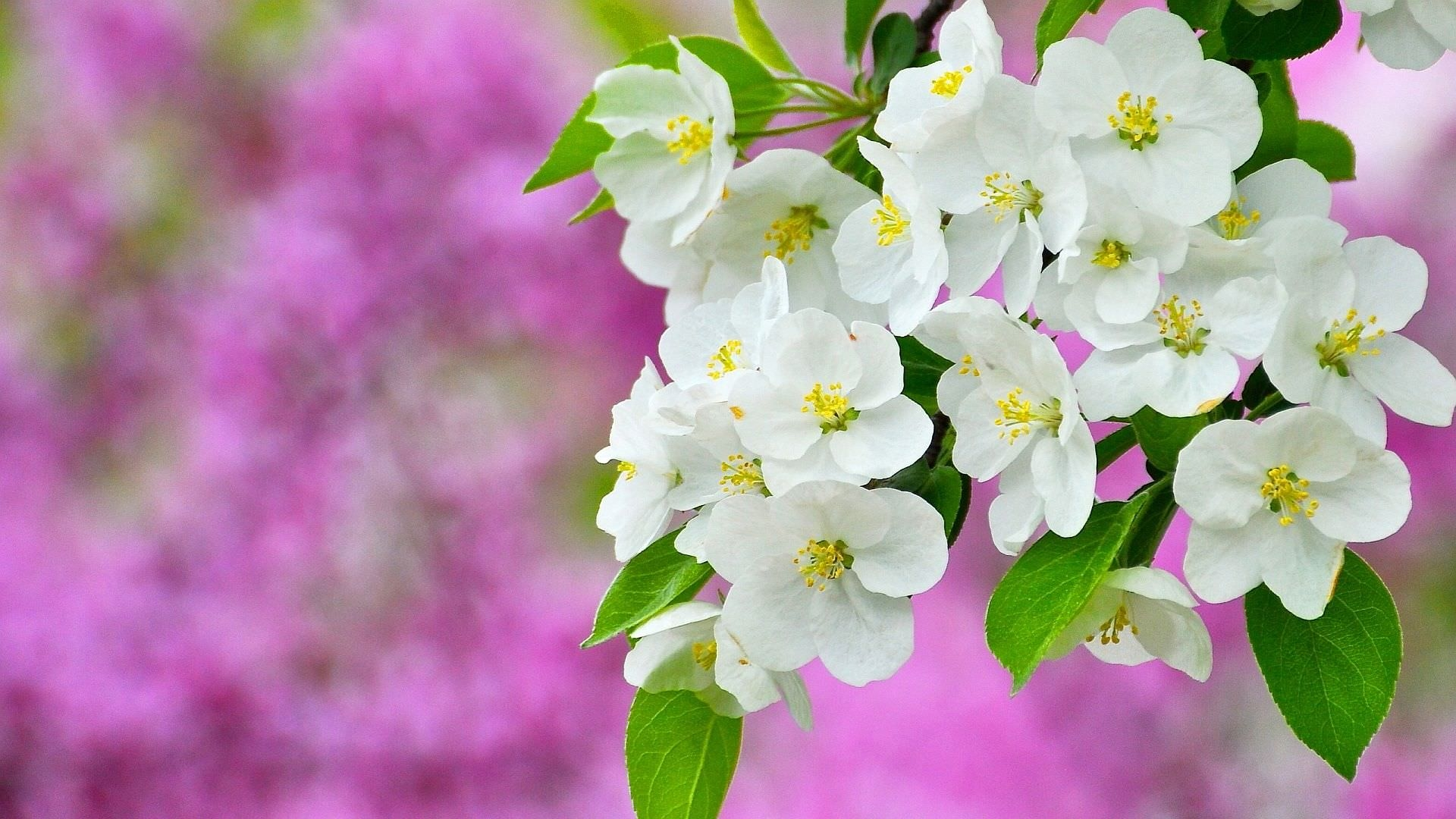 spring blossom sapling wallpapers