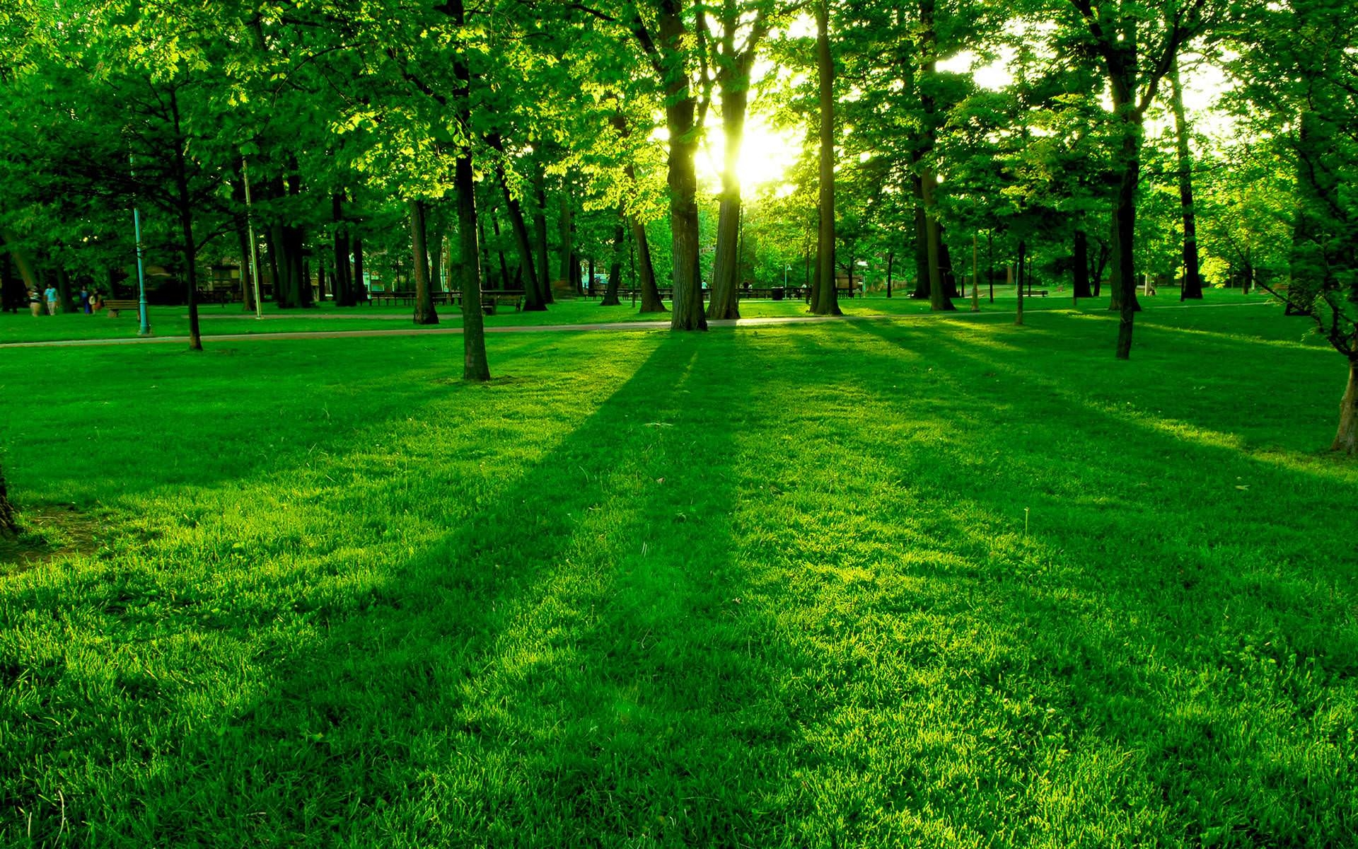 stunning nature spring greenery wallpapers