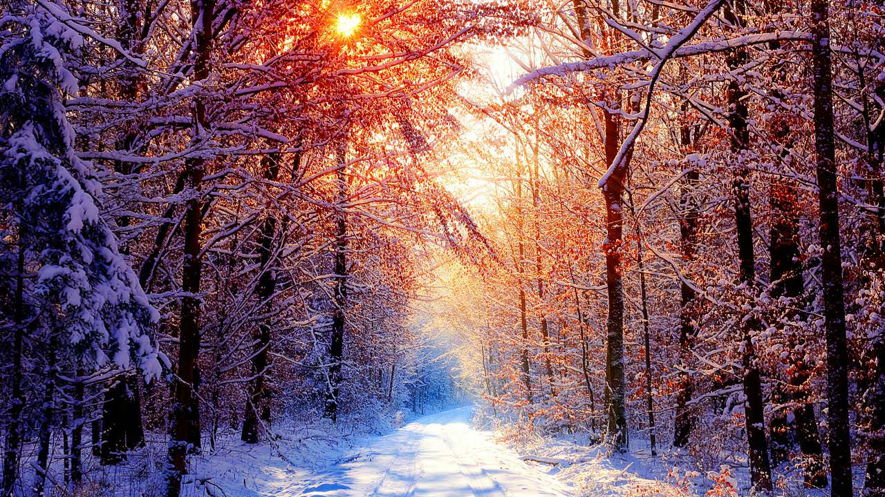 Sunset Winter Forest Wallpaper