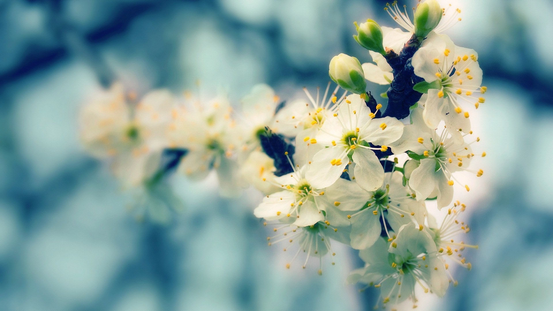 blooming spring glare wallpaper background