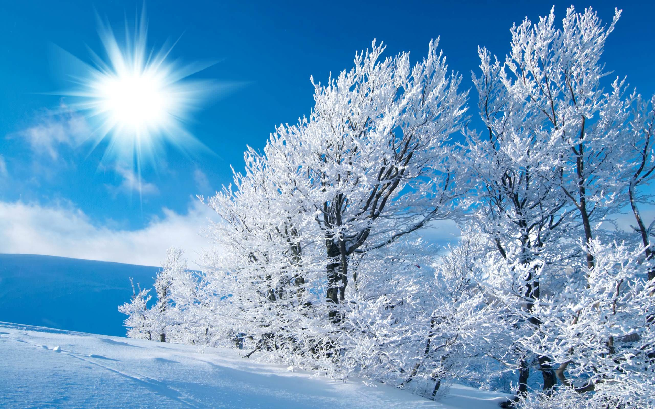 Winter HD Wallpaper For Download