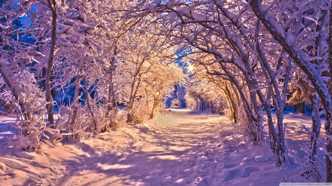Snowy Tree Archway Winter Wallpaper