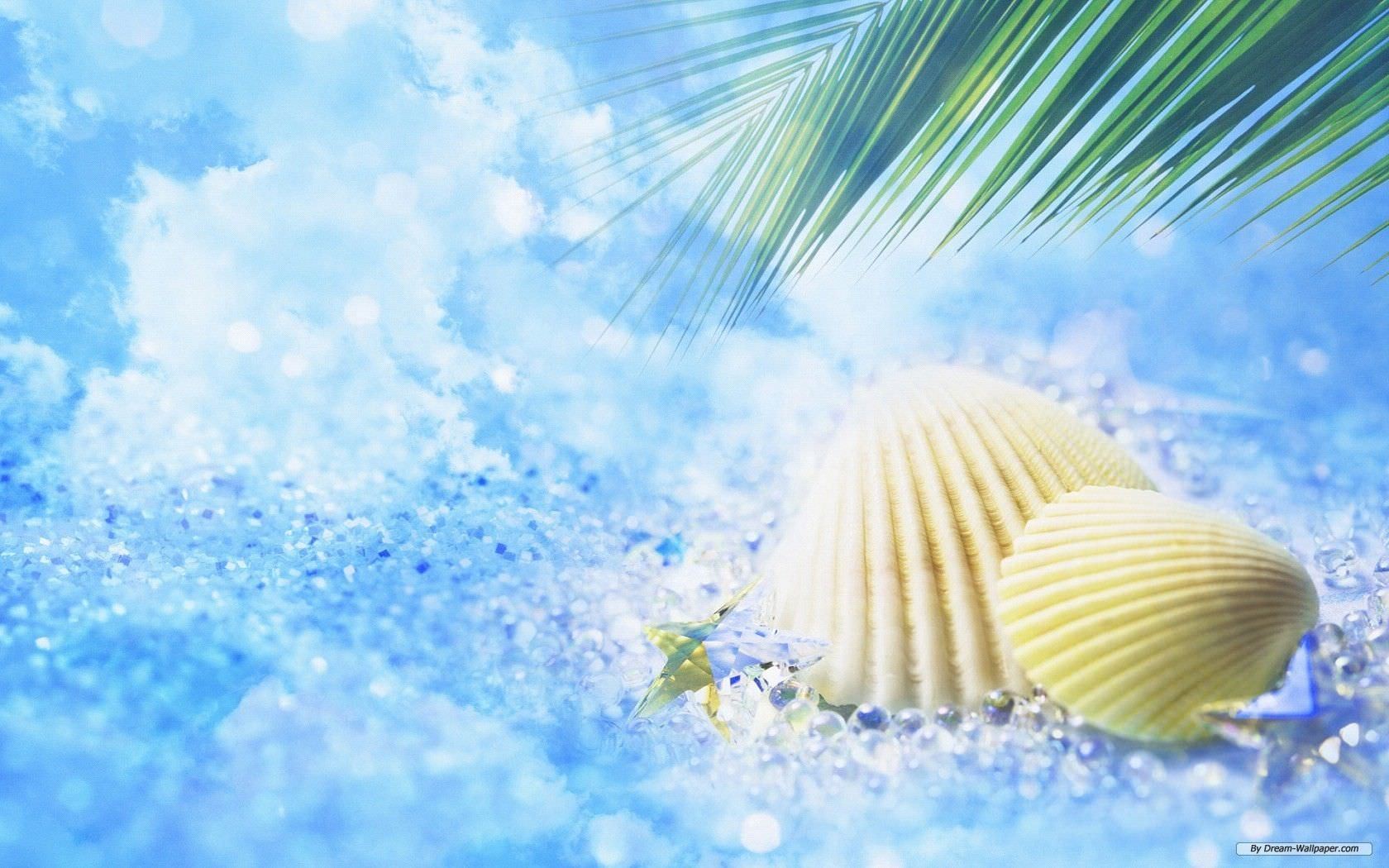 Sea Shells Summer Wallpaper