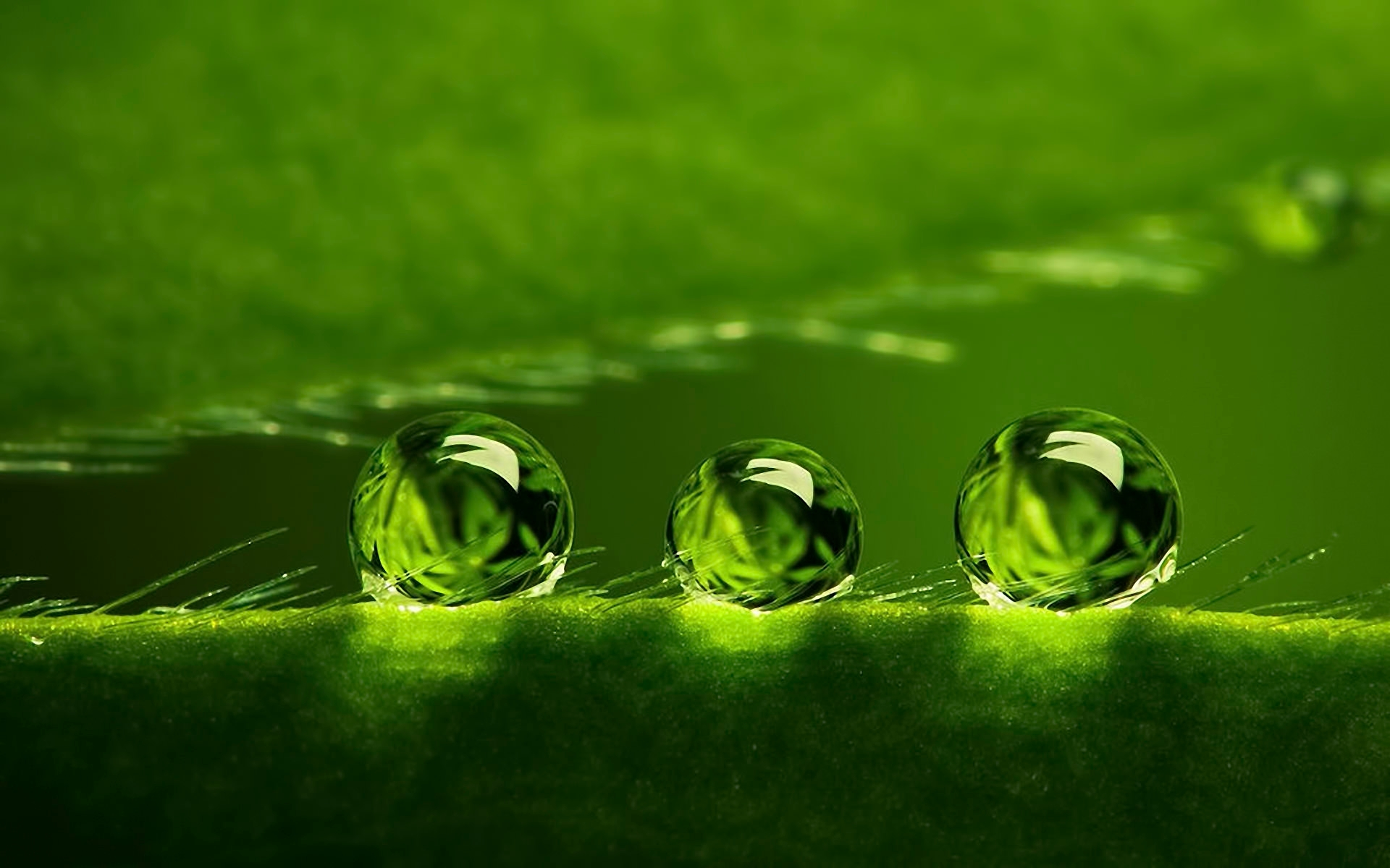 Green Bubbles HD Wallpaper