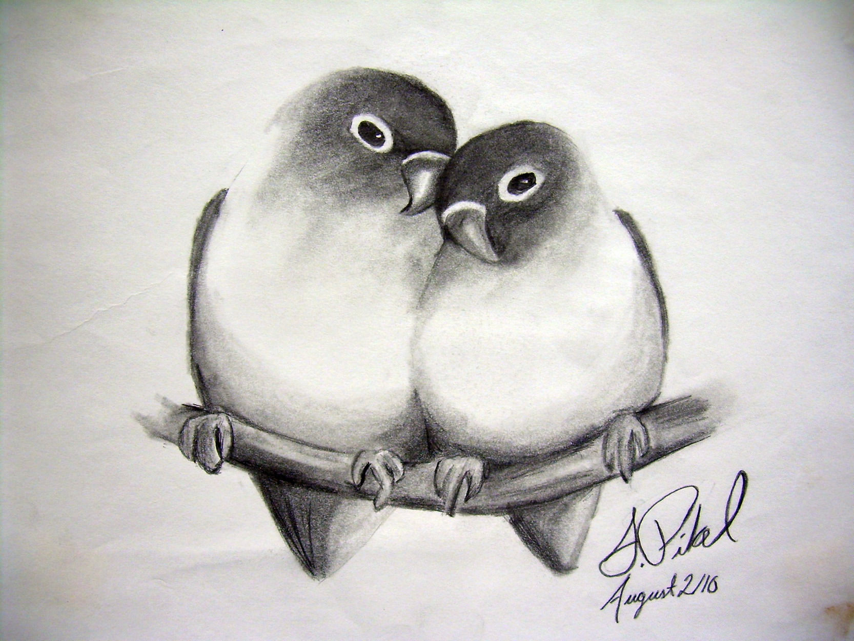 Beautiful love birds drawing