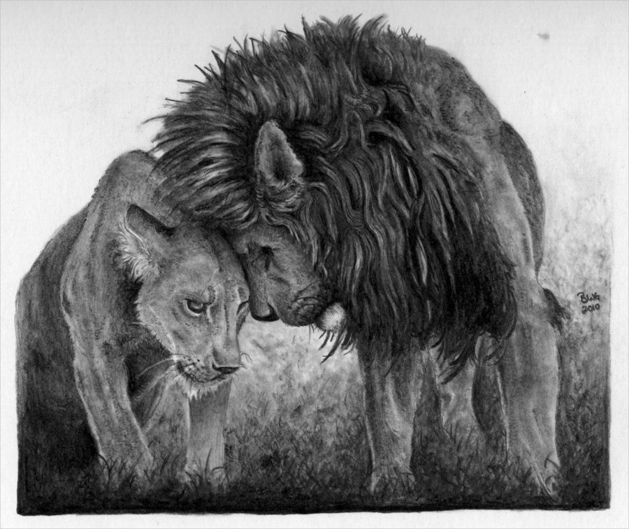lions in love drawing for free