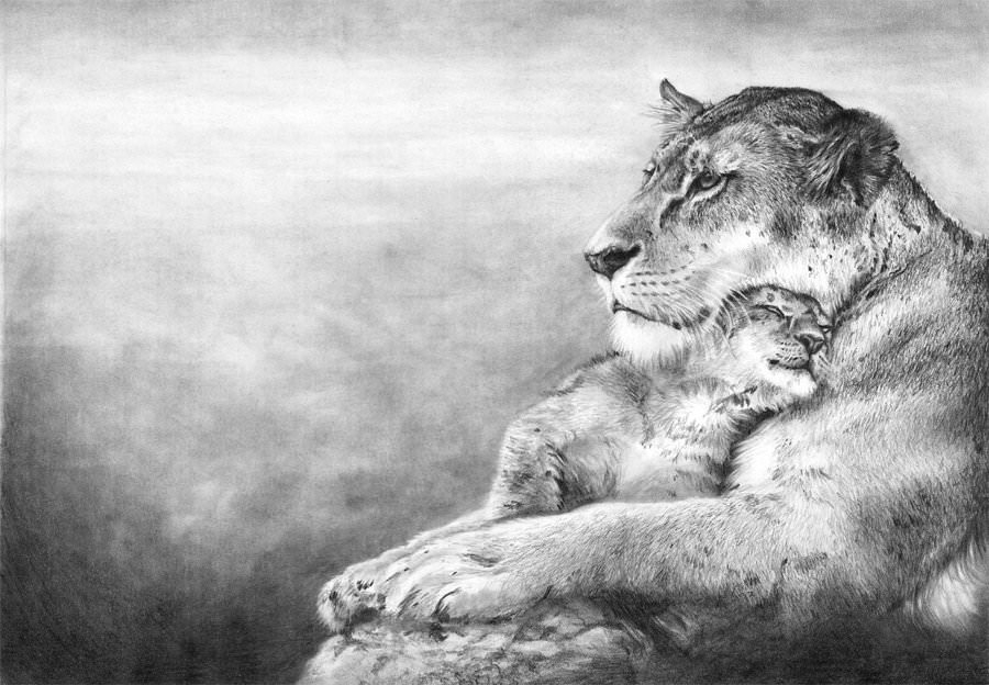 a lion mother with her young drawing
