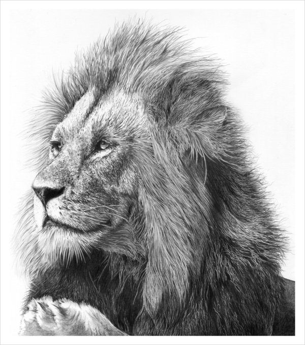 fantastic lion drawing for free