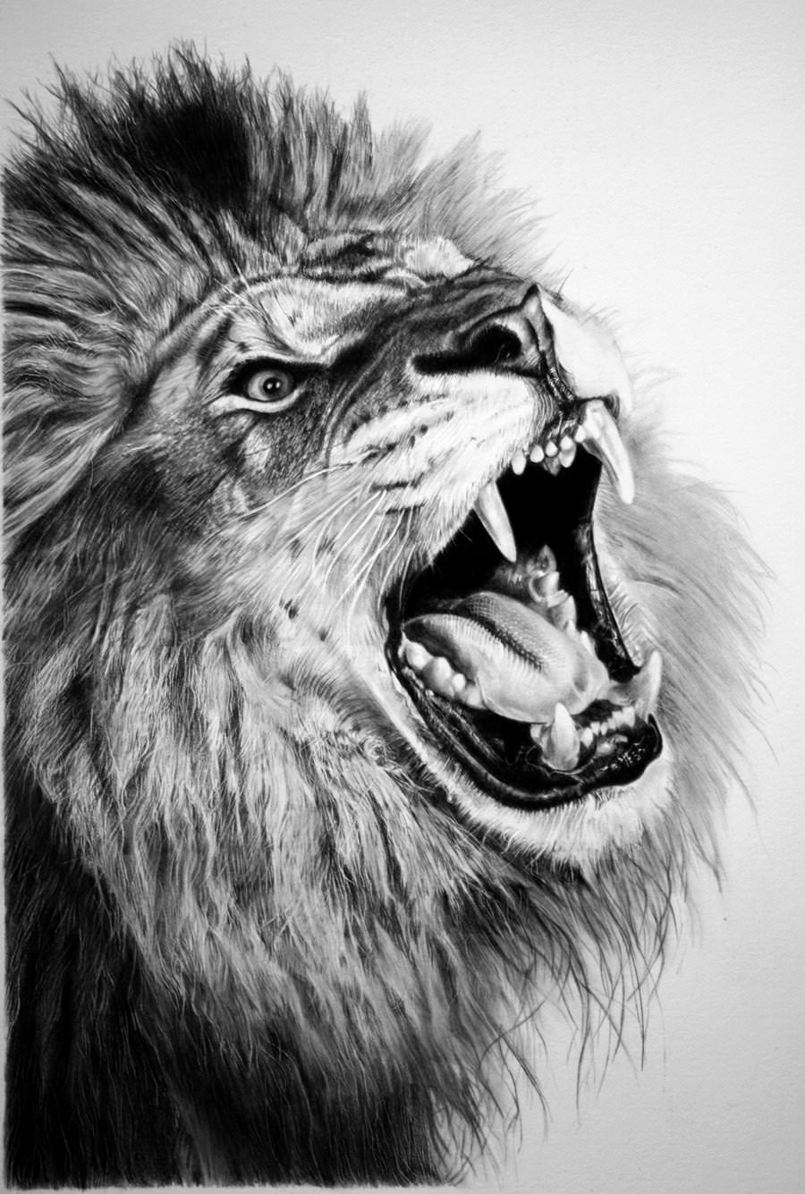 Amazing lion pencil drawing