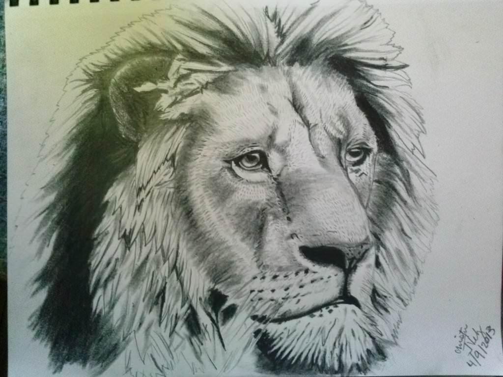 Detailed Lion Sketch
