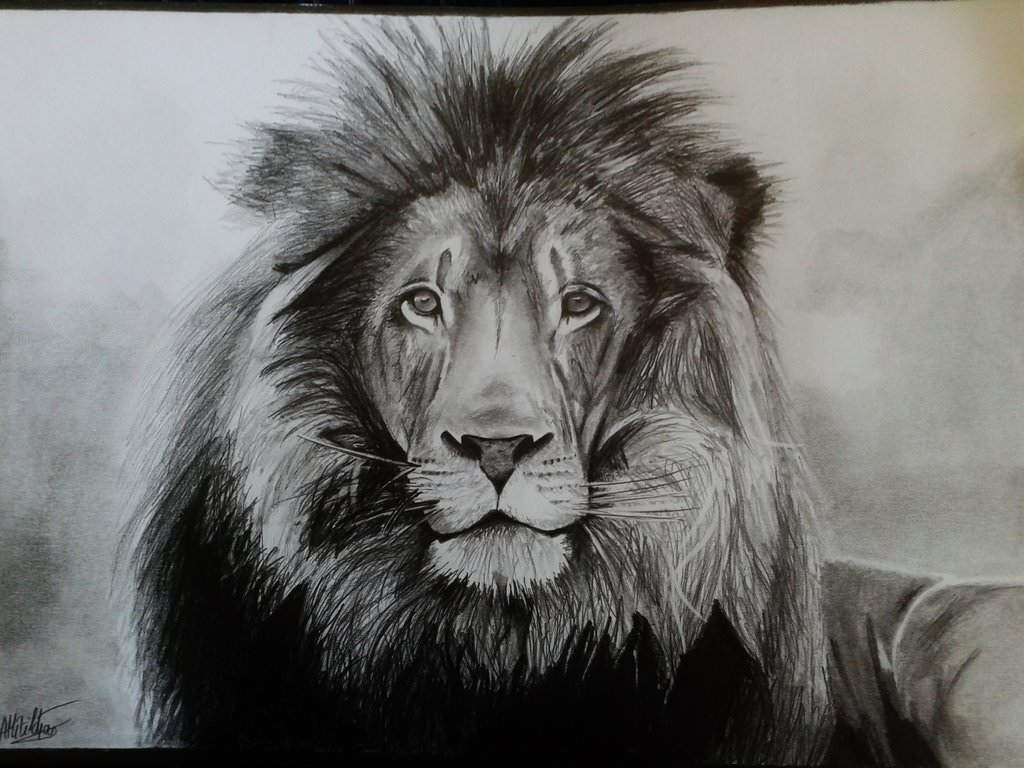 1024 x 768 jpeg 117kB, 17+ Lion Drawings, Pencil Drawings, Sketches ...