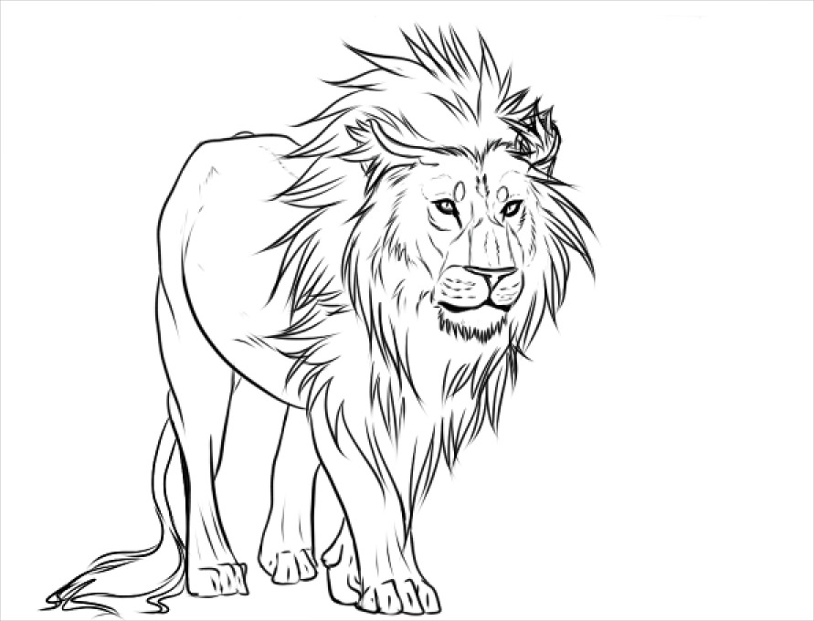 Drawing Lines With D : Lion drawings pencil sketches freecreatives