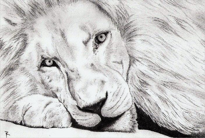 Beautiful Lion Drawing