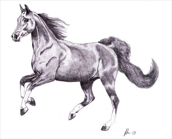 Galloping Horse Drawing