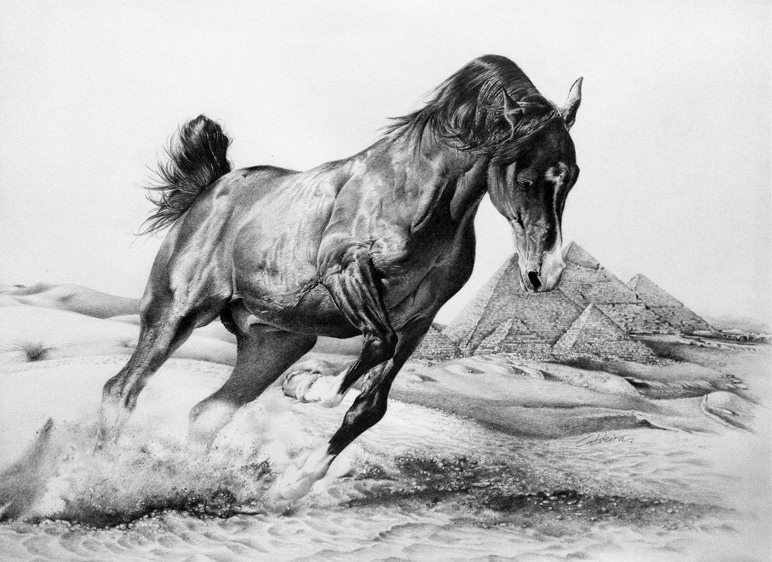 Ride in the Desert Horse Drawing